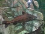Shark Reef Aquarium Las Vegas, Shark Reef, Shark Reef at Mandalay Bay, Shark Reef at Mandalay Bay Resort & Casino, Shark Reef Aquarium at Mandalay Bay Hotel & Casino, Mandalay Bay Las Vegas, Las Vegas, Las Vegas Strip, Las Vegas Boulevard