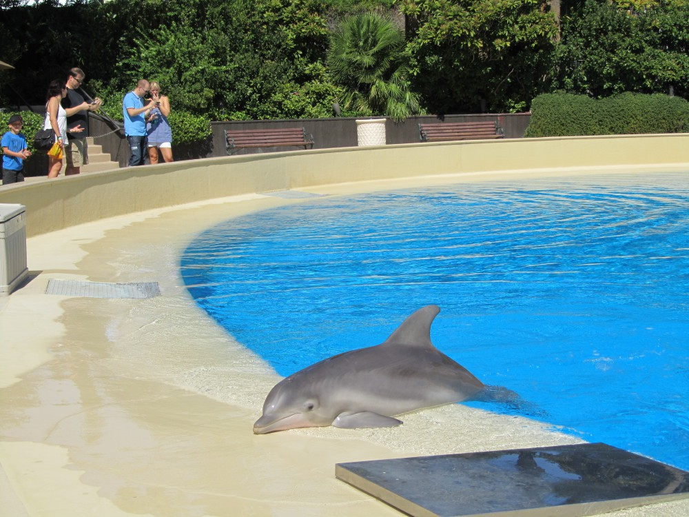 Siegfried Roy S Secret Garden And Dolphin Habitat Vegas High Roller